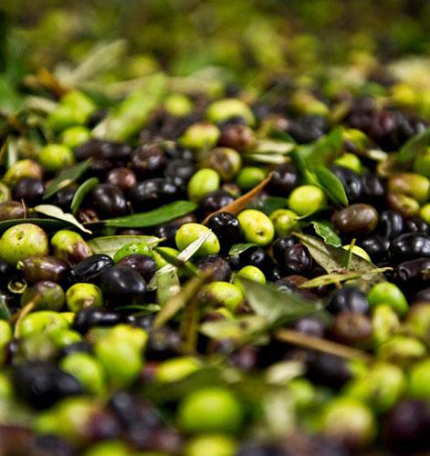 Trasporto olive e riconsegna olio